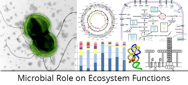 Microbial Role on Ecosystem Functions