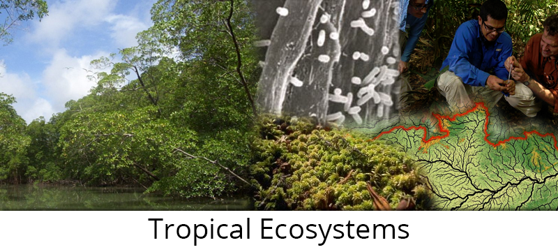 Tropical Ecoystems Research